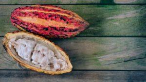 mazorca cacao